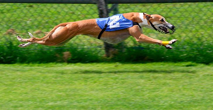 Perros y el doping