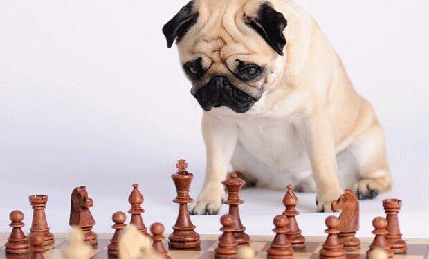los perros inteligentes