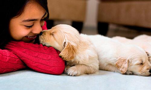 perro-amo