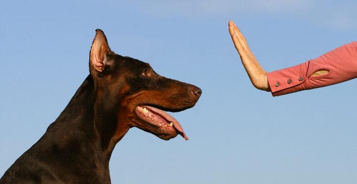 Adiestrando perros