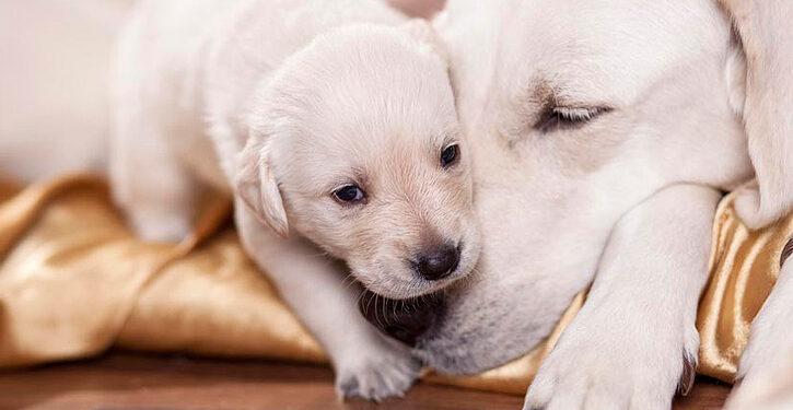 me voy a comprar un perro - eligiendo cachorros