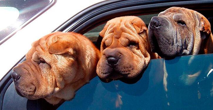 perros que contaminan mas que un coche