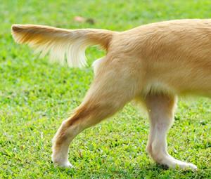 cola del perro comunicacion