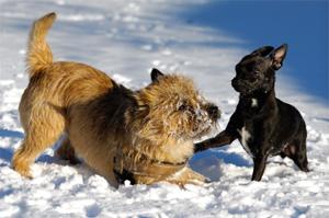perros en conflicto