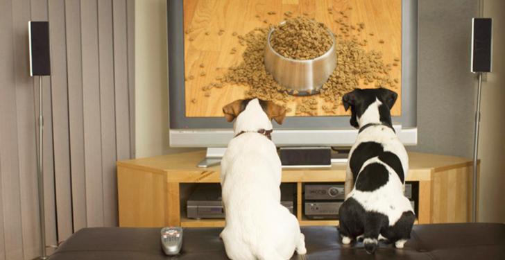 Perros que ven televisión