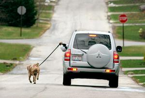 coche contamina mas que un perro