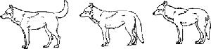 como se expresan los perros