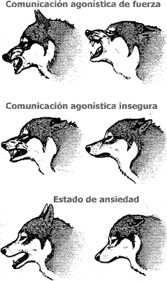 perros comunicación agonística