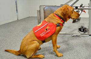 perros huelen cancer
