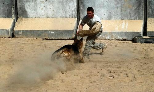 perro entrenado en defensa