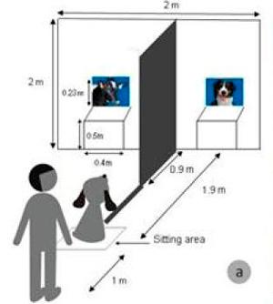 investigacion sobre perros que ven television