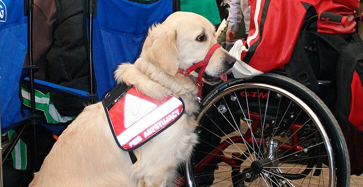 Perros de zooterapia
