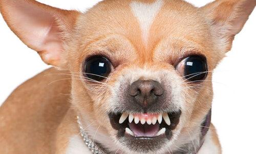 como defenderse de perros agresivos que atacan