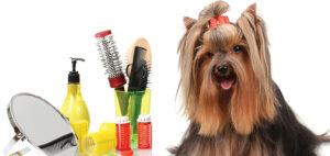 La belleza del perro: una tarea cotidiana