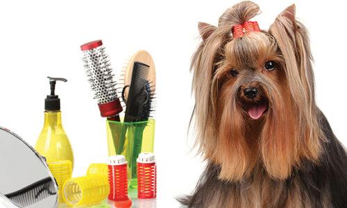 peluqueria del yorkshire terrier