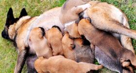 maternidad canina