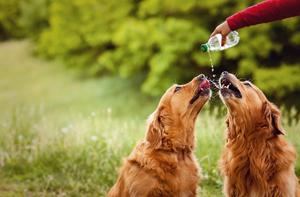 perros bebiendo