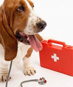 perros con enfermedades cardíacas