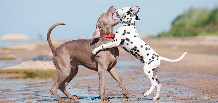 perros con problemas de comportamiento