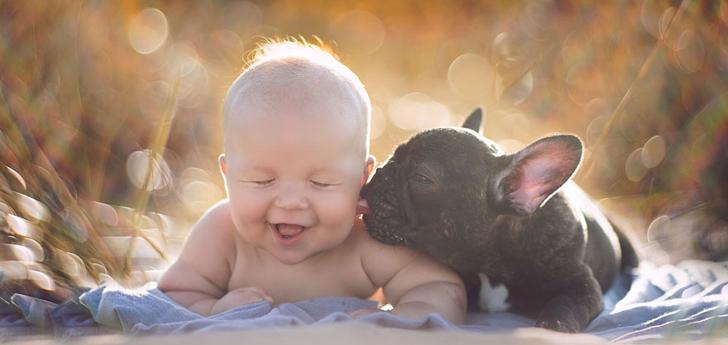 perros-y-bebes