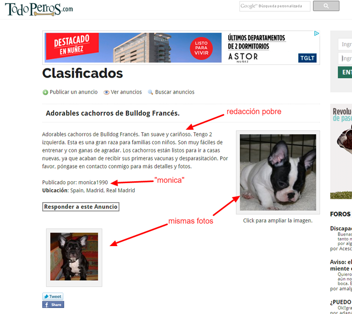 estafa con anuncios de perros