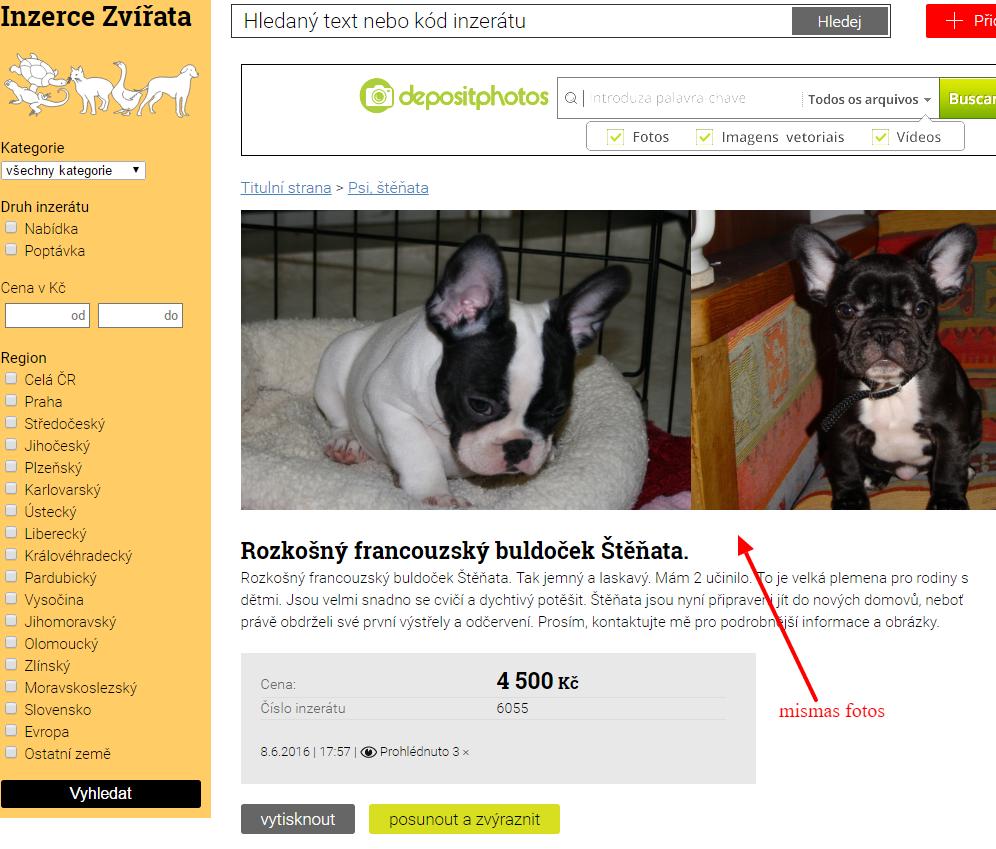 Estafan con anuncios de perros