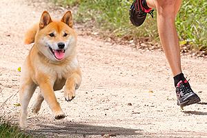 Los perros jovenes y el ejercicio