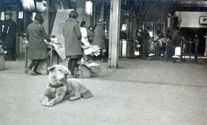 Foto original del verdadero Hachiko, tomada en el año 1934