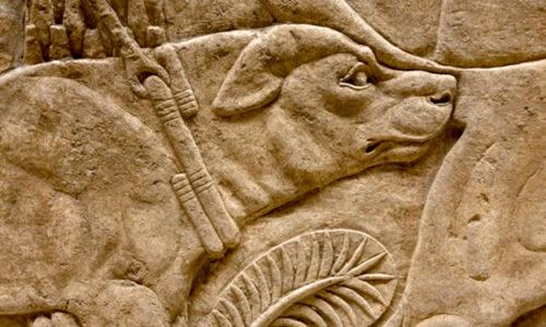 Peritas, el perro de Alejandro Magno