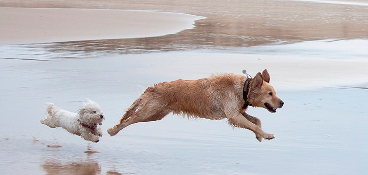 Ejercicio en perros jóvenes