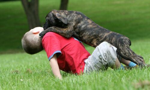 La edad adulta de Truco - la etologia del perro