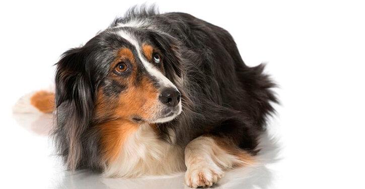 Perros con fobias