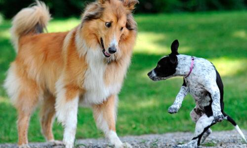 Las manías de mis perros | agresividad por miedo