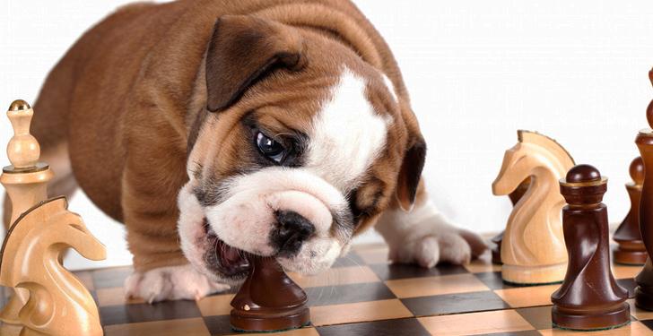 Perros que juegan ajedrez