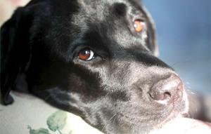 La Etología del Perro - perro enfermo