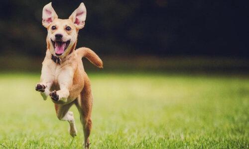 La etología del Perro - Con el último suspiro