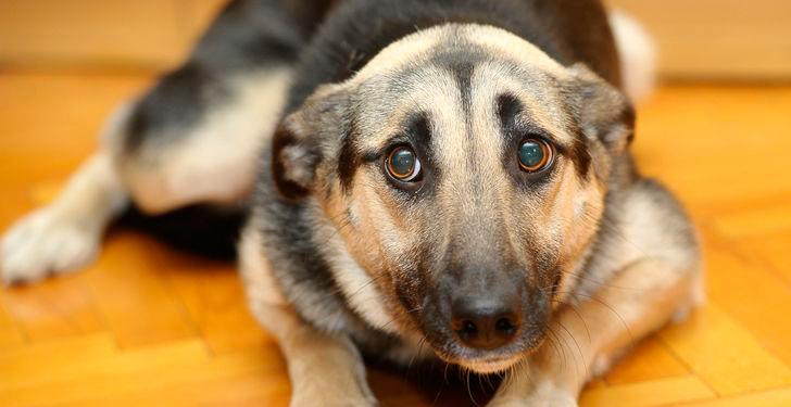 conjunto de manifestaciones relativas al comportamiento que sufren algunos perros cuando se separan de sus dueños