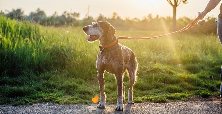 El ejercicio y la edad en el perro