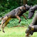 La Ética Profesional de Adiestrador de Perros