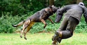 La ética profesional del adiestrador de perros