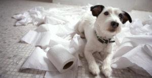 Perros con ansiedad por separacion