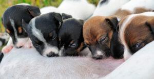 Cachorros mamando de su madre
