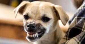 La agresividad en los perros, tipos de agresividad