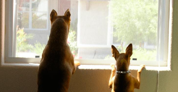 Perros llamando la atención