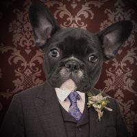 Retratos digitales de mascotas