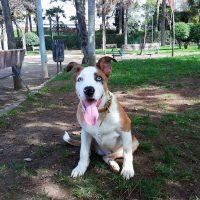 cachorrito de 6 meses