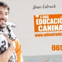 Si tienes problemas con tu perro, nosotros somos educadores caninos a domicilio