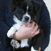 Cachorro perro en adopcion