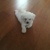 Mi perrito tiene una bolita