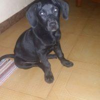 Cachorrita en adopción